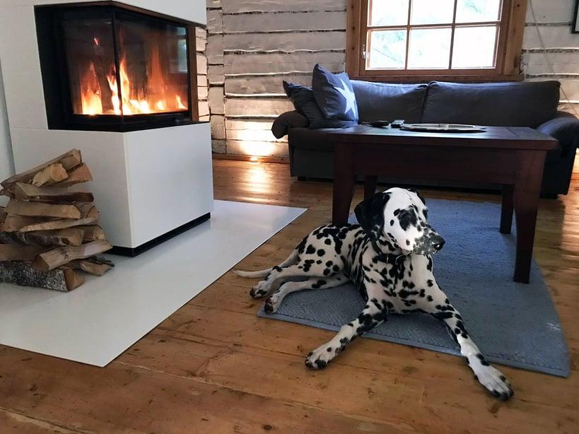 Roosa dalmatiankoira nauttii myös lämmöstä