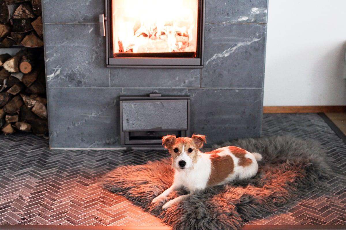 Alma -koira nauttii takan lämmöstä