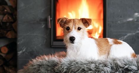 Alma -koira nauttii lämmöstä
